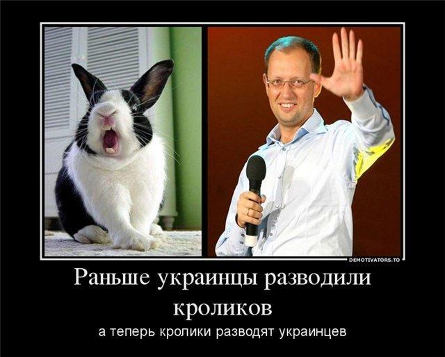 сеня кролик