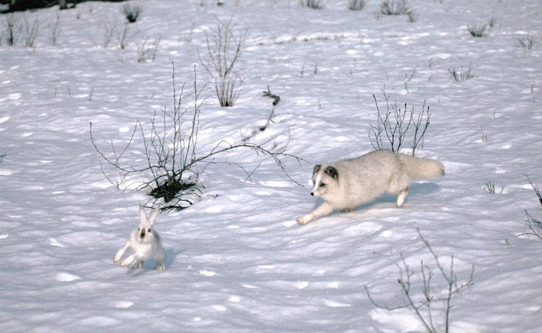 ловить 2 зайцев