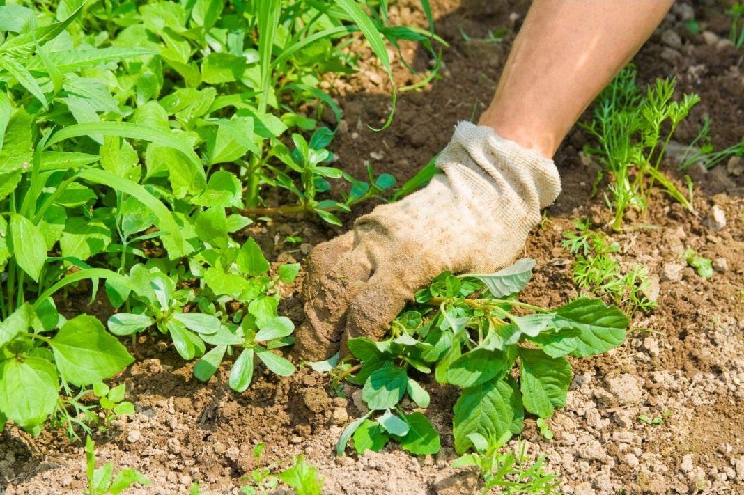 Полный список штрафов для садоводов на июнь 2018 года