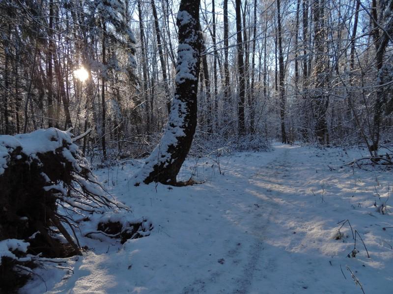 Зима S