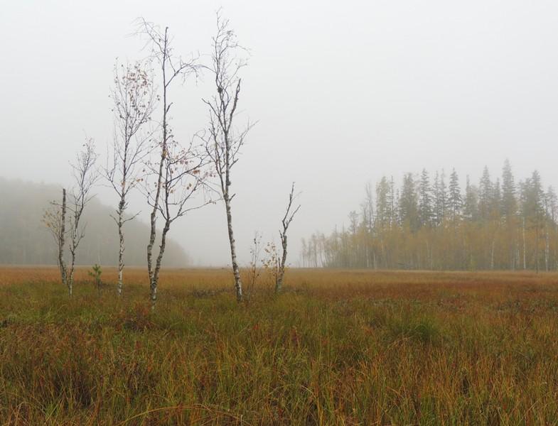 На болоте осень