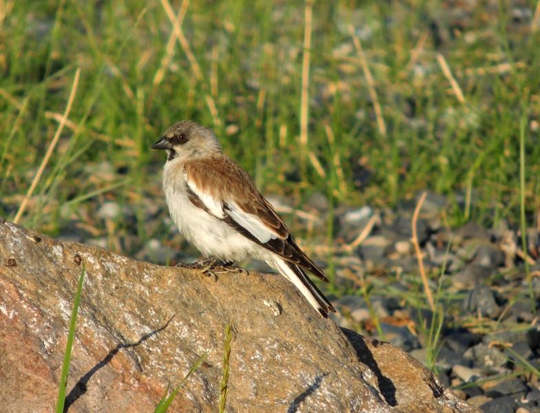 Метки монголия птицы фото