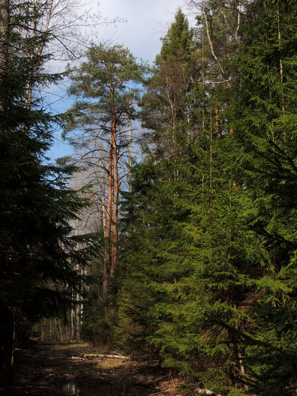 Дорога на Горки Лесовые