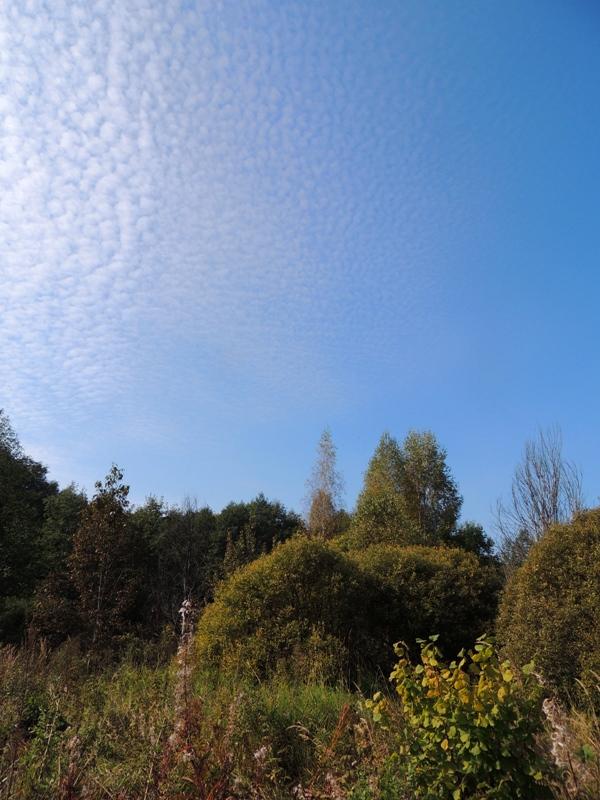 Небо в горошек