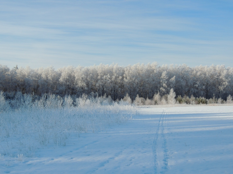 Синяя лыжня