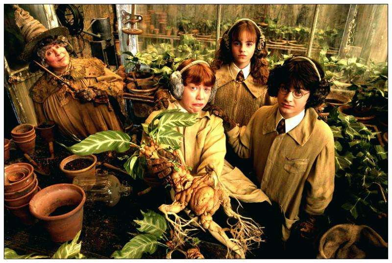 """кадр из фильма """"Гарри Потер"""""""