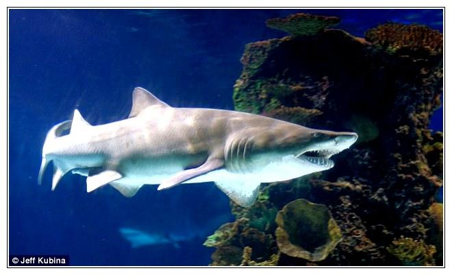 11-shark.jpg