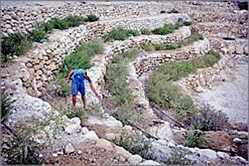 """Террасы """"Аругот ХаБосем"""" в Эйн Геди Фото - Михаэль Патаэль, Haaretz"""
