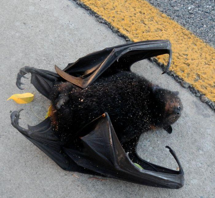 bat_1