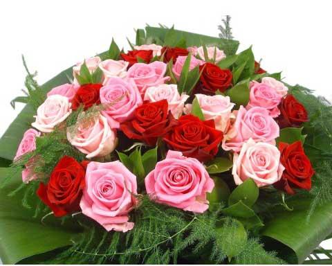cnndyan caxikner flowershome.am