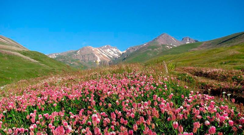 Հայաստանի բուսական աշխարհ