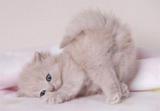 http://pics.livejournal.com/aroma_zhasmin/pic/00013ykz