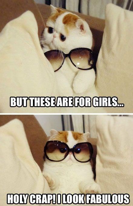 Cats glassesjpg