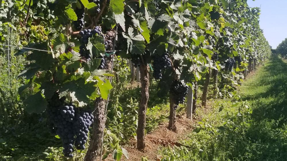 И виноград в долине. А еще иногда встречается инжир.