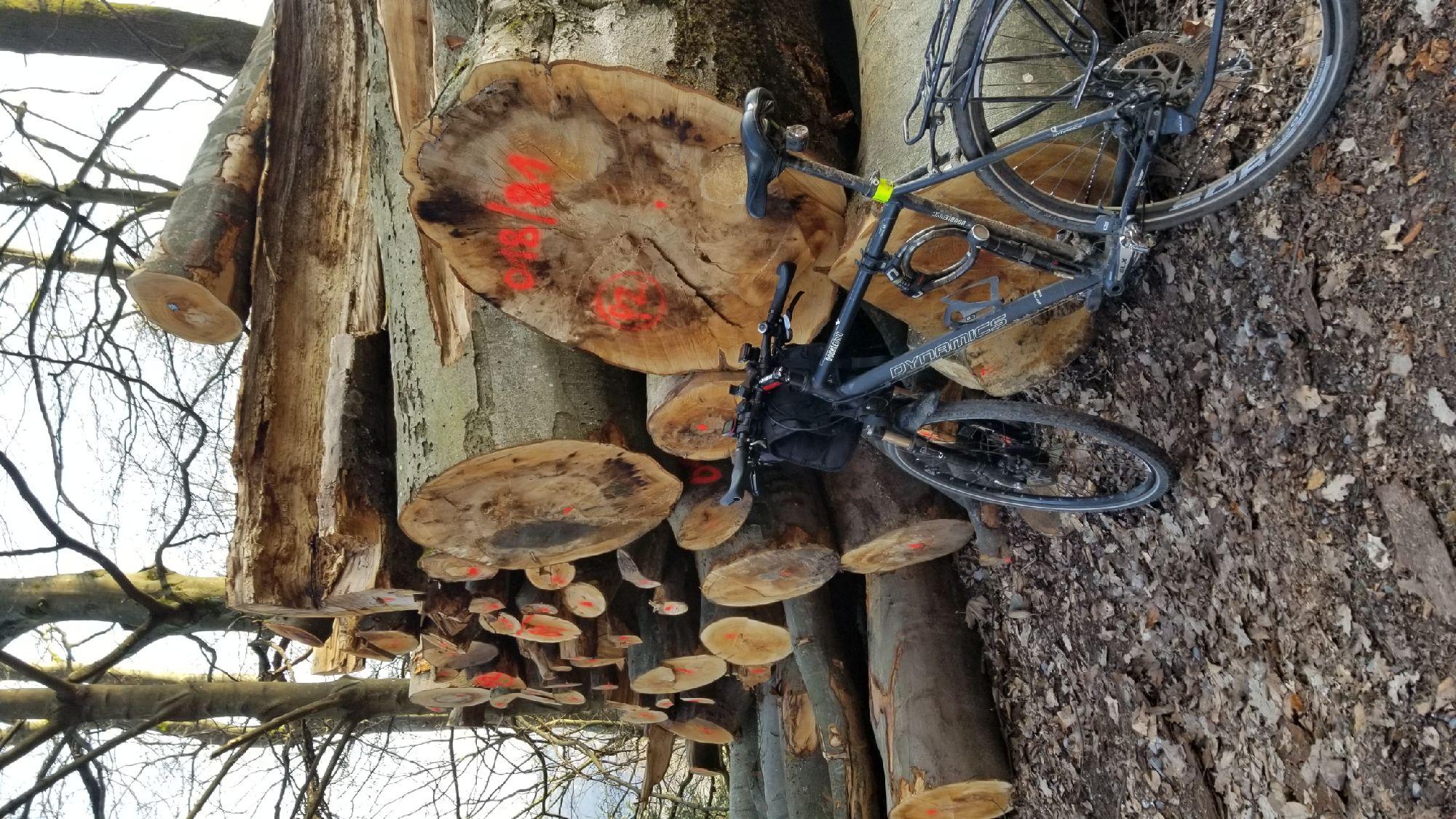 После зимы попадало куча деревьев. Их уже собрали, маринуют. Скока этим букам лет?