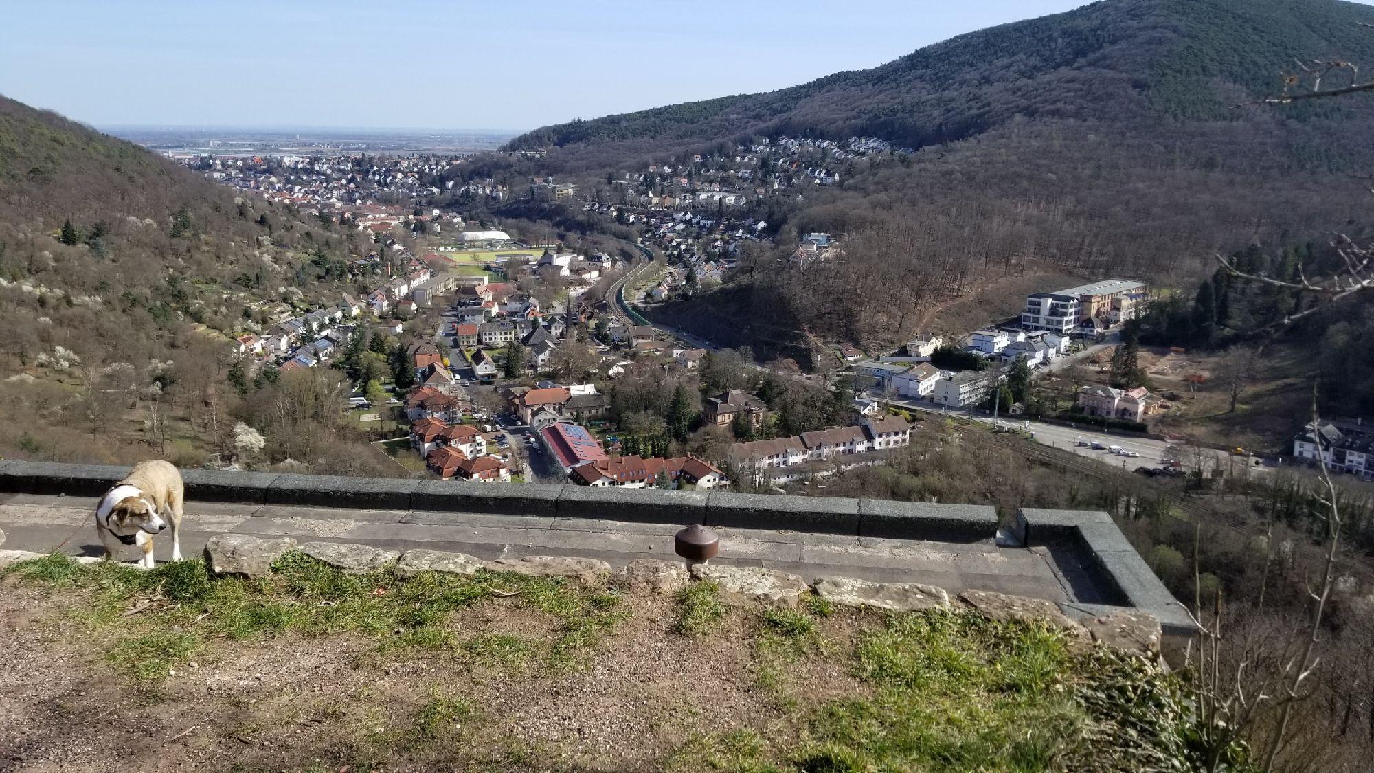Вид с Вольфсбурга на Нойштадт.