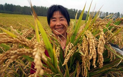 побочные эффекты сельскохозяйственная кооперация в японии отдел