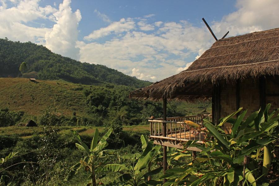 bamboonest (2)