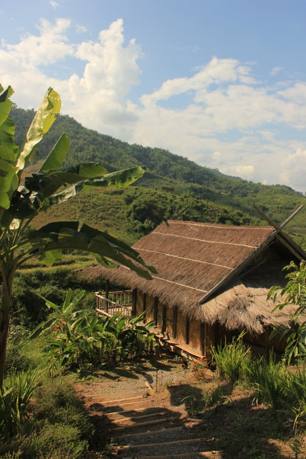 bamboonest (3)