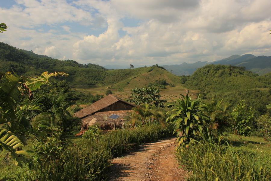 bamboonest (4)