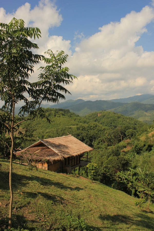 bamboonest (6)