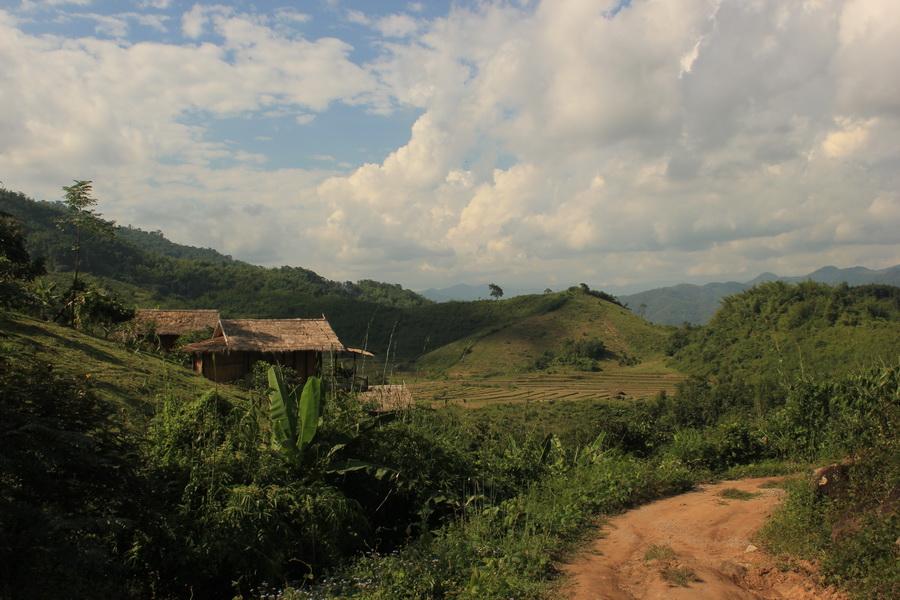 bamboonest (7)