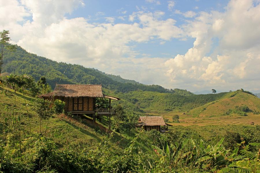 bamboonest (8)