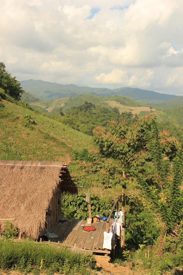 bamboonest (14)