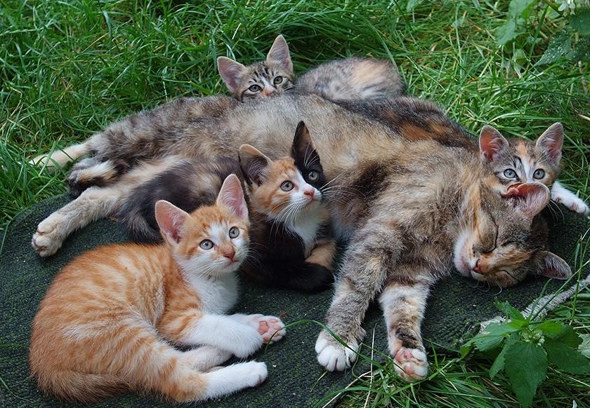 семья кошек_edited-1
