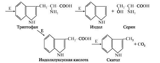 Рис. 5. Катаболизм триптофана под действием бактерий.