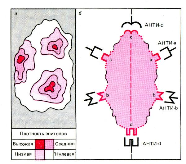 белок-антиген