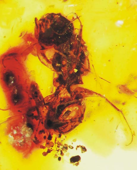 Древнейшая из пчел
