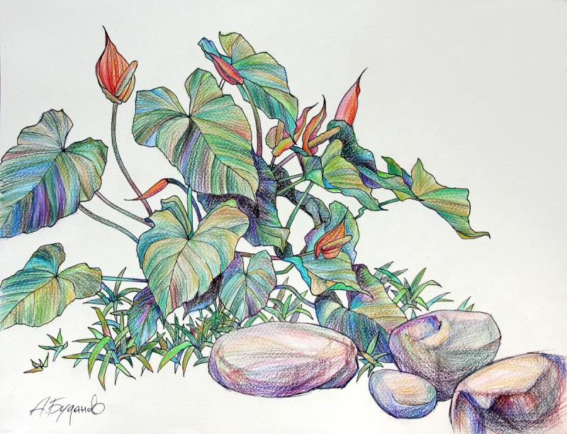 Александр Буданов. Тропические цветы. Антуриум