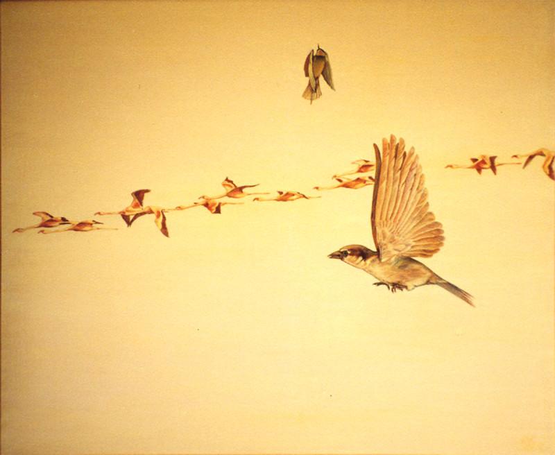 "Александр Буданов ""Los Pájaros"""