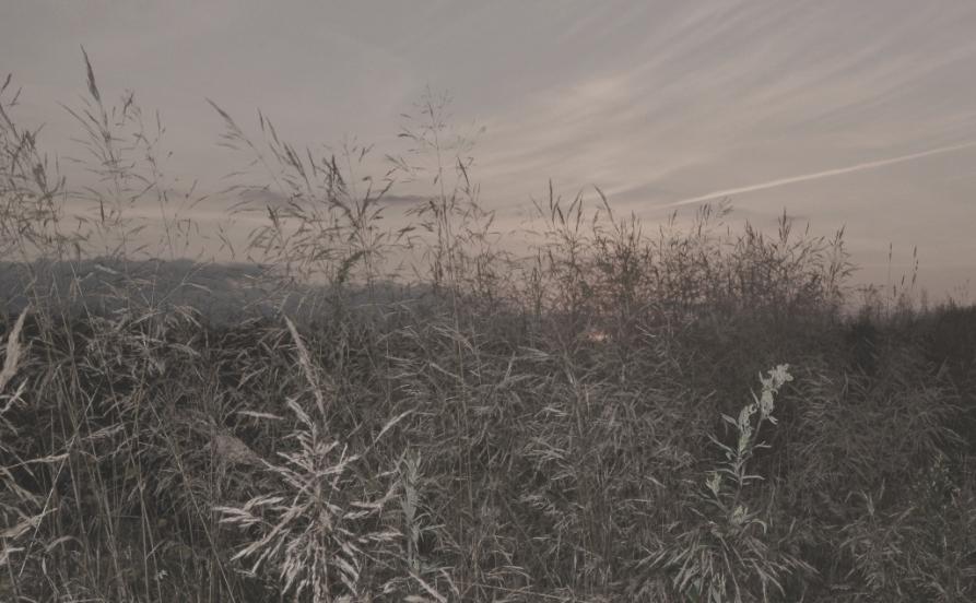 DSC_2258 - копия