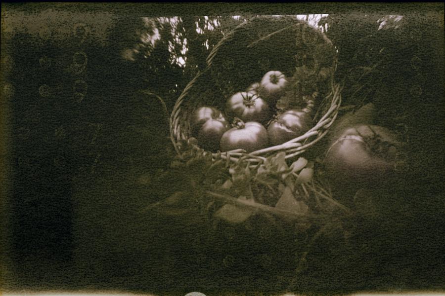 Андрей Жуков. Помидоры. Искривляющий пинхол, кадр 6х9,5 см, плёнка 1976 года, ручная проявка в кофеноле. 2011 год.