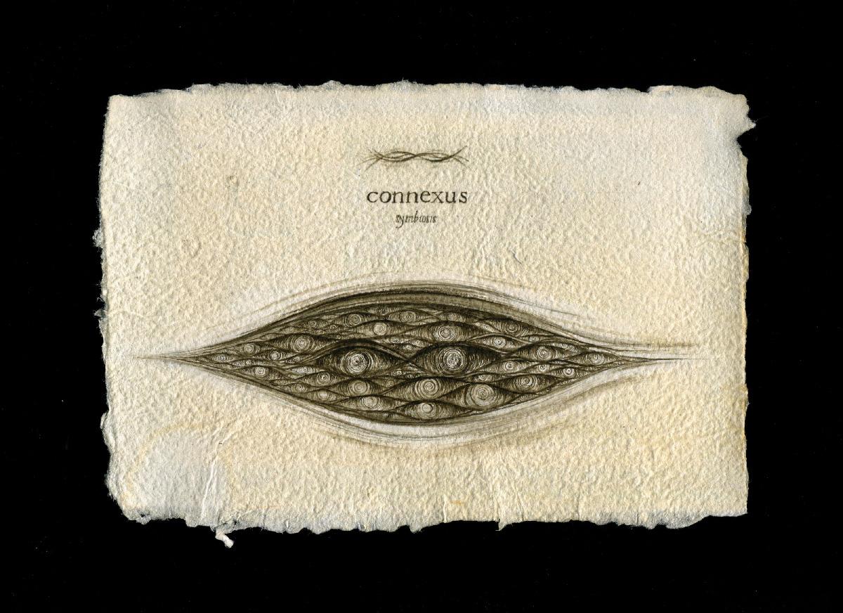 connecsus00