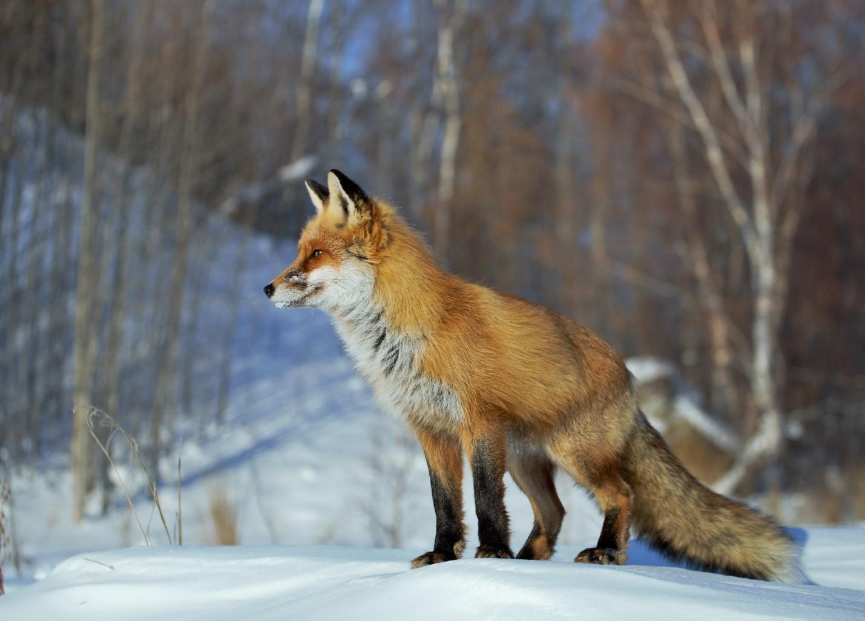 Фотография из блога Артура Мурзаханова https://artur-murzahan.livejournal.com/
