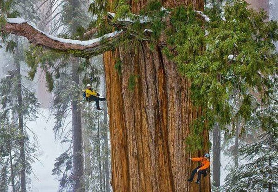 1620752_10202316731894095_740143588_n.jpgСеквойя Президент в Национальном парке Секвойя (США) является вторым по величине деревом в мире. Считается, что ему примерно 3200 лет