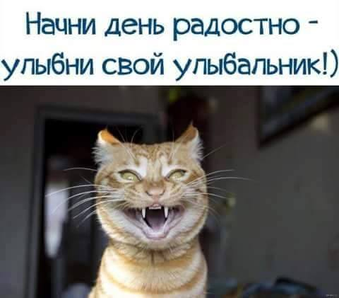 картинка улыбнитесь улыбальник обезвреживает