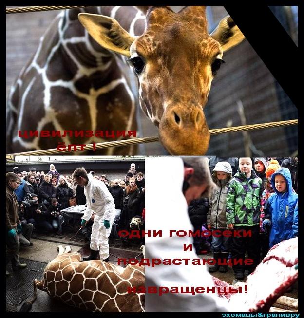жираф2014-02-11