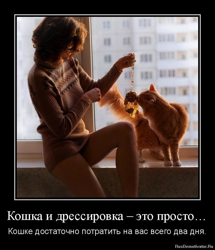 koshka-i-dressirovka-yeto-prosto