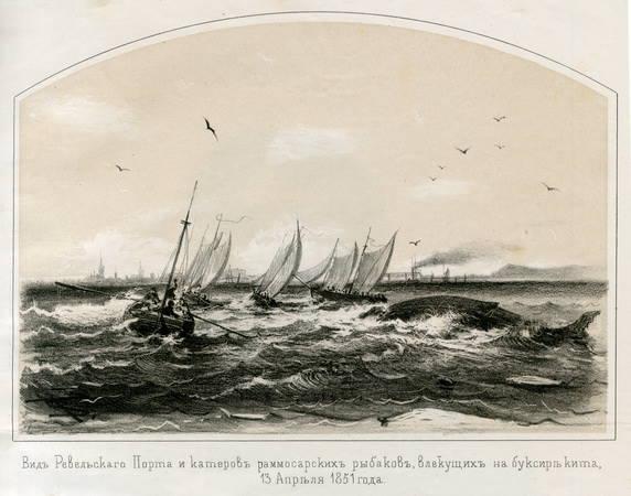 Ревельский кит. Рис. 1851 года