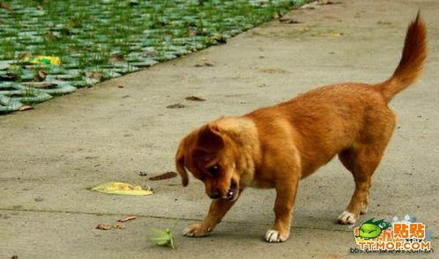 собака и богомол