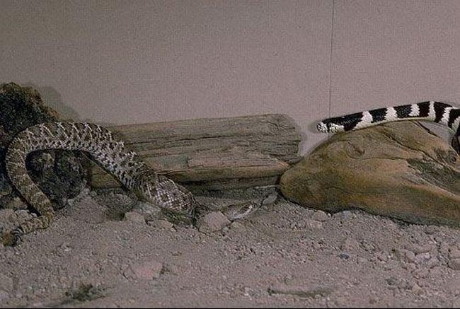 бттва змей