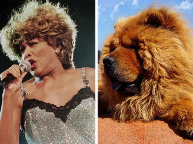 знаменитости как животные