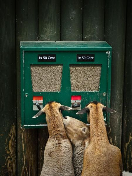 забавные животные