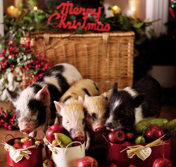новогодние свинки