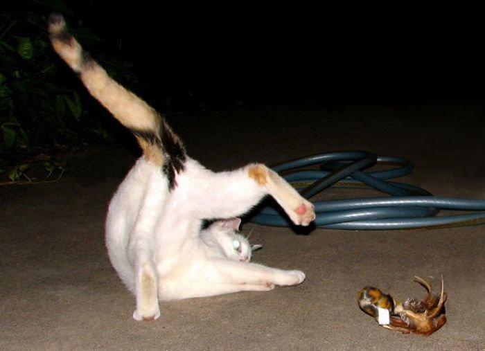 кошки йога