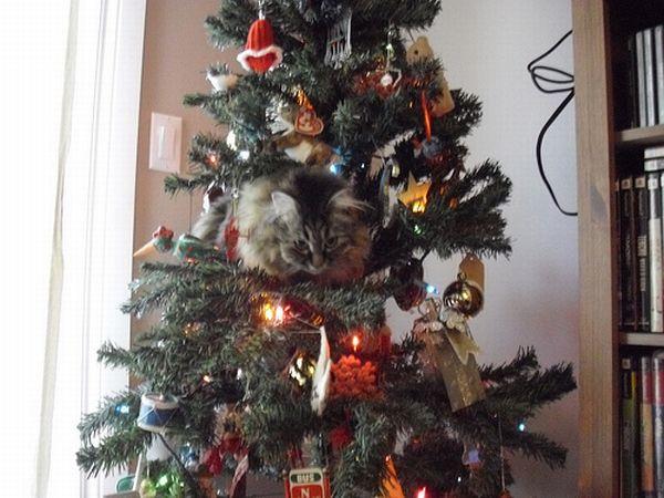 кошки любят новый год